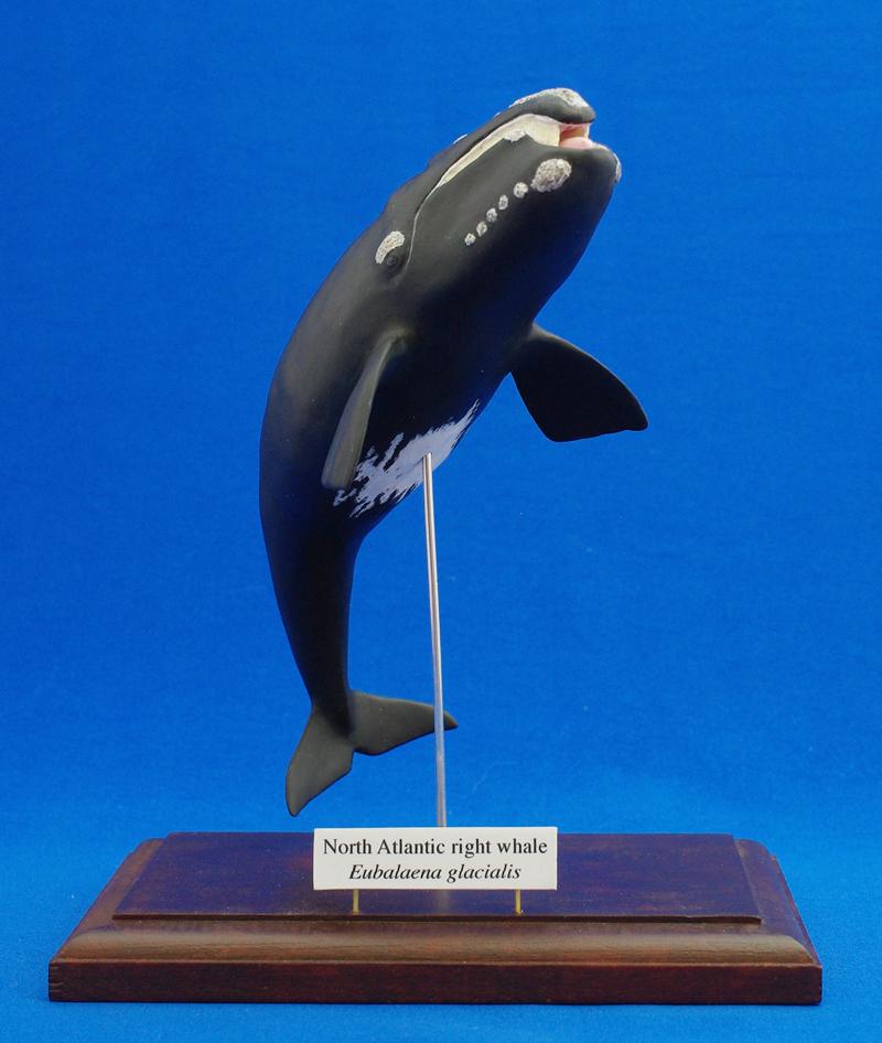セミクジラの画像 p1_16