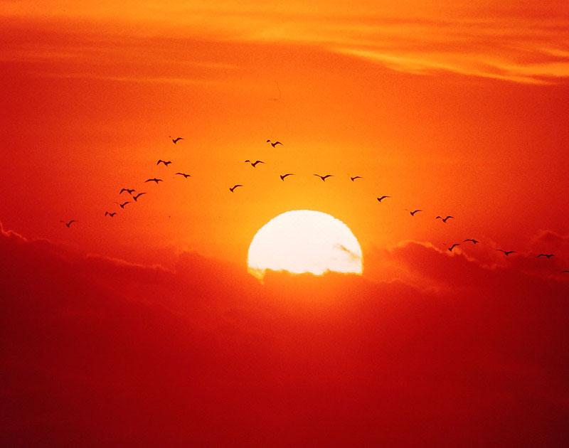 太陽の画像 p1_29